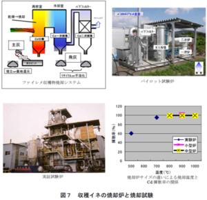 カドミウム汚染土壌の修復技術の開発