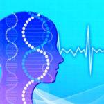iPS細胞から心臓を作って移植したら好みは変わるのかな?