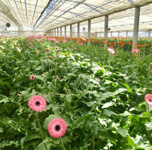 情報の重要性を「見える化」したスマート農業と今後の課題